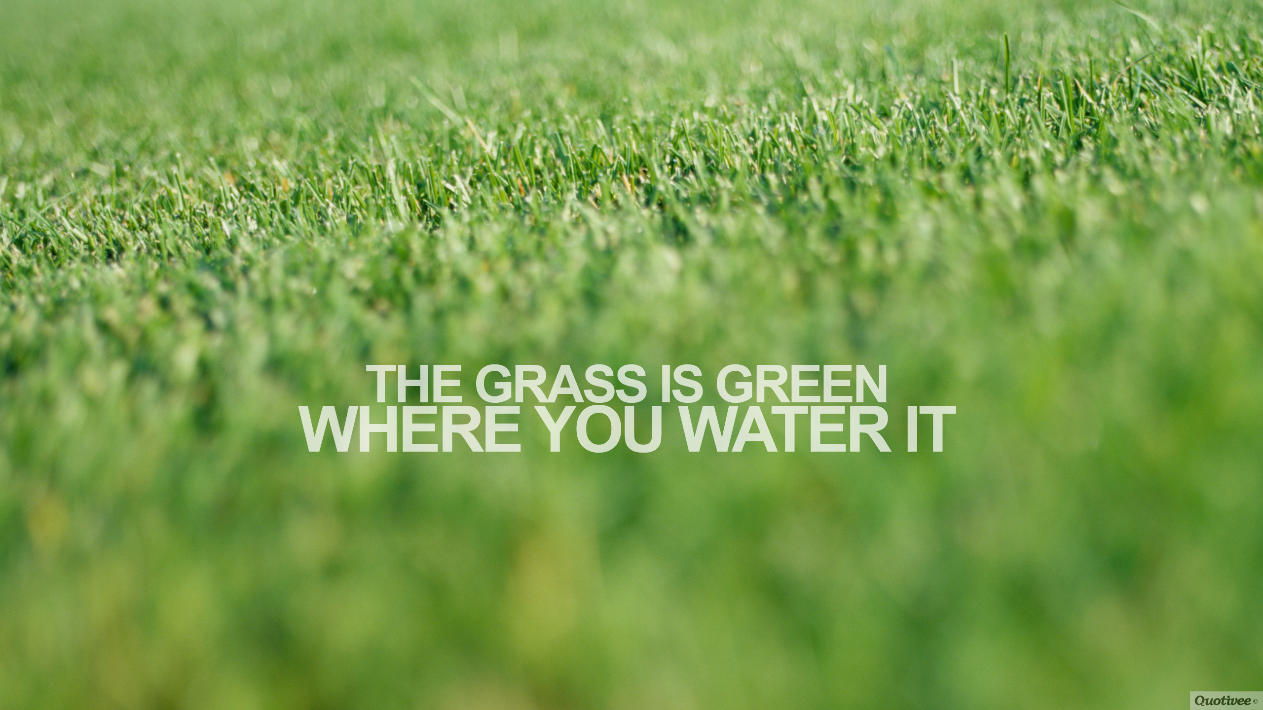 where the grass is green